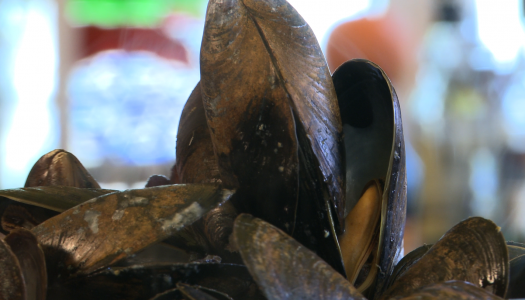 Mussels 101
